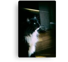 Chiaroscuro cat Canvas Print