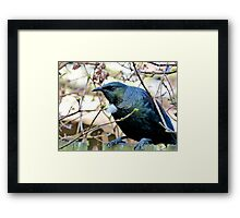 Don't Look At Me - Tui - NZ Framed Print