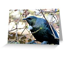 Don't Look At Me - Tui - NZ Greeting Card