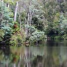 Arthur River, Tasmania - reflections by gaylene