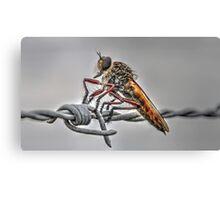 Cicada (3) Canvas Print