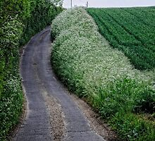 Country Lane by Karen  Betts