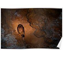 110619 Lesurue National Park, Stockyard Gully caves - Boobook Owl under tourch light Poster