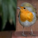 Robin Redbreast by Thea 65