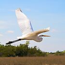 White Heron in Flight by Bill Wetmore