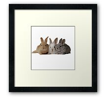 3-Bunnies Framed Print