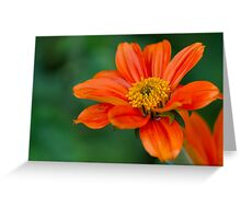 asters after the rain in the garden Greeting Card