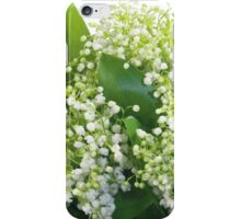may-lily iPhone Case/Skin