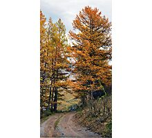 Autumn dirt road larch forest Photographic Print