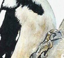 Woodpecker - Wild Birds Sticker