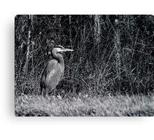 Heron, Hunting Canvas Print