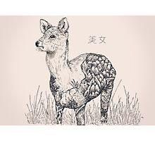 Chinese Water Deer Photographic Print