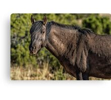 Garcia No. 2-Pryor Mustangs Canvas Print