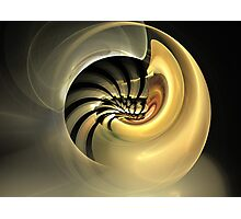 Golden Mollusk Photographic Print