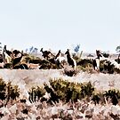 The Herd.  by Larrikin  Photography