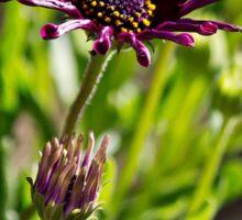 Wild Purple Sticker