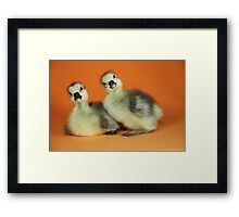Baby Goslings Photograph Framed Print
