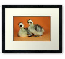 Baby Goslings Photograph Framed Print