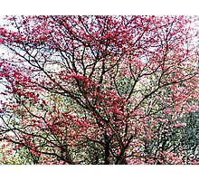 Glorious Spring Photographic Print