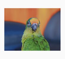 Delta - Peach-Fronted Conure - NZ One Piece - Short Sleeve