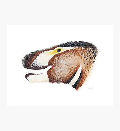 Fuzzy Tyrannosaurus Photographic Print