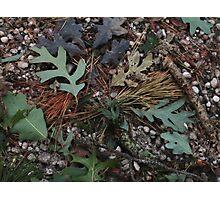 Pine Barrens Microcosm Photographic Print