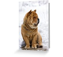 Winter chow dog portrait Greeting Card