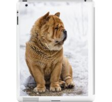 Winter chow dog portrait iPad Case/Skin