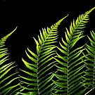 Fern by cclaude