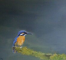 Kingfisher by andy davis
