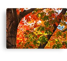 Stepping Into Autumn Colors Canvas Print