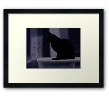Cat on a porch Framed Print