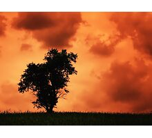 The Lonely Tree - russet sky (2011) Photographic Print