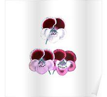 Vintage pink purple white botanical pansies floral Poster