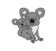 sweet little baby koala cute mamapapa child sitting hold back young family Photographic Print