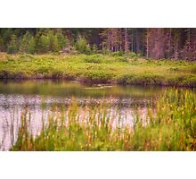 On A Golden Pond Photographic Print