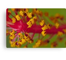 Sweet Pollen Canvas Print