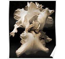 Monochrome Image of an Iris Poster