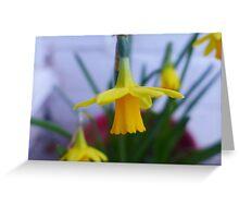 Little yellow dancer : tête à tête daffodil close up Greeting Card