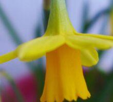 Little yellow dancer : tête à tête daffodil close up Sticker