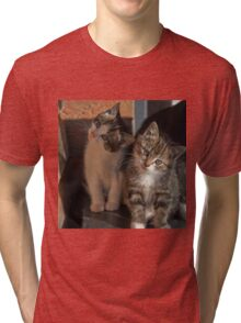 CUTE KITTIES Tri-blend T-Shirt