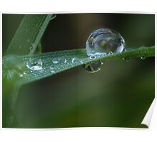Rain drops on grass - macro  Poster