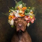 Flower Power, Rodger by Sophie Gamand