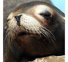CUTE SEA LION Photographic Print
