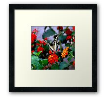 BUTTERFLY FLOWERS 1 Framed Print