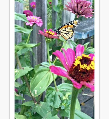 Monarch Butterfly Zinnia Sticker