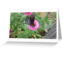 Butterfly on Zinnias Greeting Card