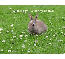 Easter Bunny Wishes - NZ Photographic Print