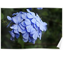 Tuscan Flowers Poster
