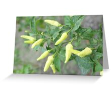 hot chili peppers on a tree Greeting Card